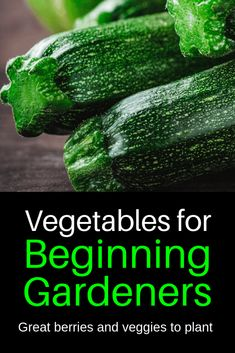 Read these 15 easy gardening tips and hacks so that you can have a garden that is lush with produce. Gardening is fun when you know how to do it right! Winter Vegetables, Planting Vegetables, Organic Vegetables, Growing Vegetables, Organic Fruit, Planting Seeds, Vegetable Garden Planning, Vegetable Garden Design, Vegetable Gardening