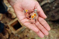 Tiny Chicks! - Via thenewspatroller.com