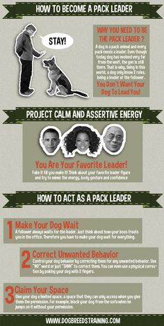 How to Become a Pack Leader Infographic