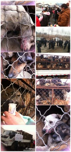 Now we eat dog meat? Volunteers said the truck was on its way to Guangdong province in southern China, where dog meat is often served in restaurants.    Sign the petition @ https://www.change.org/petitions/stop-horrific-dog-meat-trade-demand-china-make-animal-cruelty-laws    It won't allow me to pin this site.