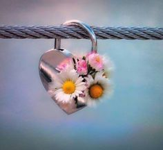 Good Morning Gif, Morning Wish, Morning Coffee, Morning Quotes, We Heart It, Belly Button Rings, Dandelion, Flowers, Earrings
