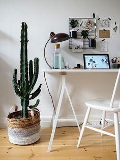 1 Kaktus, 3 Stylings – Ein Kaktus auf Reisen   craftifair