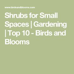 Shrubs for Small Spaces | Gardening | Top 10 - Birds and Blooms