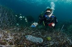 Testing the degradation of bio-plastics in the marine environment – are we missing the point?
