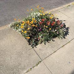 Urban Garden Gorilla gardening in sidewalk space - We like small details. Pretty Flowers, Wild Flowers, Bouquet Flowers, Flowers Nature, Fresh Flowers, Flora Flowers, Art Flowers, Plants Are Friends, No Rain