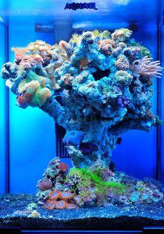 Alexander Gotin vertical design AWESOME aquarium! :)