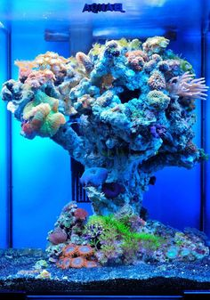 Alexander Gotin vertical design AWESOME aquarium! :)