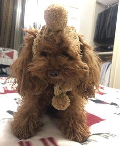Freddo polare e neve in tutta Italia, ma Coco non teme il freddo, il cappellino Roger di Trilly tutti Brilli  la protegge dalle intemperie.