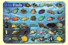 Saltwater Fish Placemat (Set of 4)