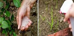 13 kerti trükk a gyomok és kártevők ellen. Ezzel a talaj minőségén is könnyedén javíthatunk! Drip Irrigation, Pest Control, Organic Gardening, Animals And Pets, Home And Garden, Herbs, Vegetables, Gardens, Decor