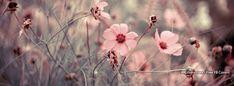 Flowers Macro 14 Facebook Covers