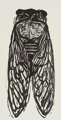 Cicada / insect - woodcut print - Kent Ambler, U.S.A.
