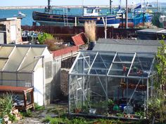 Remarkably well tended and loved allotments on the sea front in Holyhead.