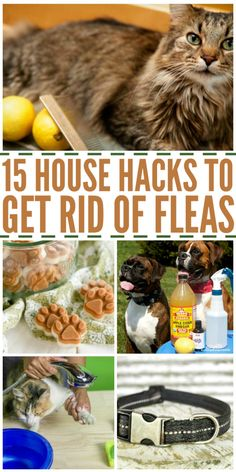 Rid your pets of those nasty fleas with these affordable and easy DIY flea removal tips and tricks.