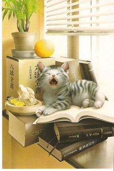 Cat by Makoto Muramatsu | Flickr - Photo Sharing!