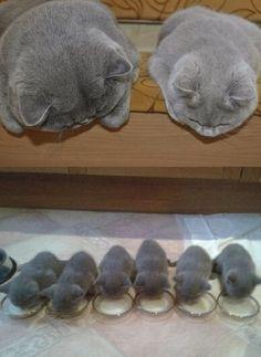 #family #cats