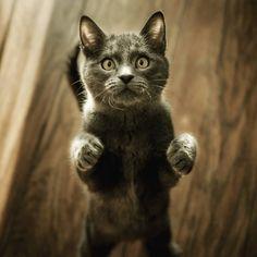 černá ssbbw kočička fotky