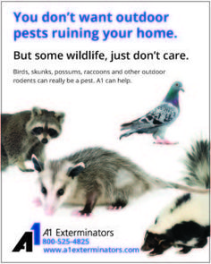Don't let outdoor pests ruin your home.  Some wildlife, like birds, skunks and raccoons can really become a problem this time of year. http://www.a1exterminators.com/nuisance-animals-pest-control/