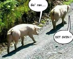 Pigs among themselves Funny pictures, sayings, jokes, really funny - Einfach geil - Lustig Funny Dog Faces, Funny Dog Videos, Funny Dogs, Friend Pictures, Funny Pictures, Haha, Good Jokes, Daily Funny, Marvel Movies