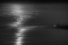 swan at moonlight by jakimbo