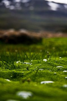 Another shot taken near Borgarfjörður eystri in the East Fjords of Iceland. The water droplets settling on the moss made for an interesting shot. Gareth Codd