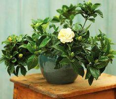 la beauté de plante d'intérieur, decouvrir la meilleure decoration avec plante d'intérieur