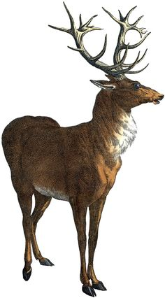 Red Deer Stag Picture Graphics Fairy
