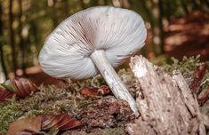 Magic Mushroom Fantasy Images, Nature Images, High Quality Images, Find Image, Stuffed Mushrooms, Magic, Bird, Black And White, Animals