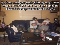 My Dog Has Made Himself At Home