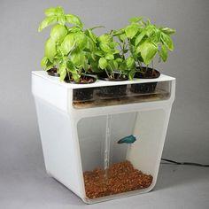 Jardin hydroponique avec aquarium
