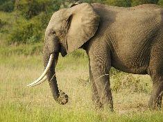 Interdiction totale du commerce de l'ivoire  À partir du 18 août 2016, le commerce d'objets composés en tout ou partie d'ivoire d'éléphant ou de corne de rhinocéros est totalement interdit, sauf pour la vente d'antiquités ou la restauration d'objets d'art datant d'avant juillet 1975.