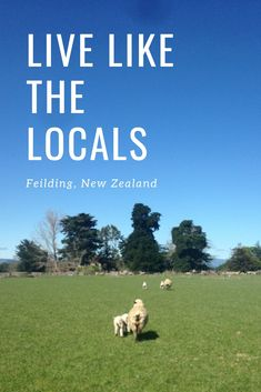 Find out about our time on the farm in Feilding, North Island in New Zealand. A different kind of experience when you live like the locals Work In Australia, Round The World Trip, Local Brewery, Veterinary Care, Wildlife Conservation, World Traveler, Long Weekend, Auckland, Us Travel