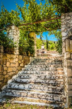 Under the Grape Vines, Zakynthos