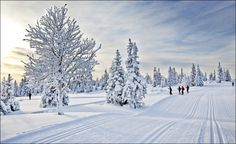 Norway's best places for skiing cross country