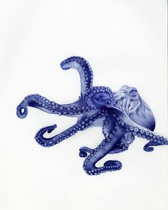 Octopus pen drawing by sarah esteje. Thanks to @S