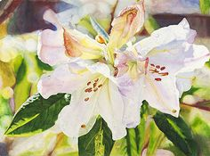 Life in Full Color - Watercolors by Cara Brown - Rhododendron Raindrops
