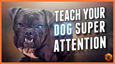 Puppy Training Tips, Dog Training Videos, Puppy Love, Dogs And Puppies, Your Dog, Teaching, Engagement, Building, Youtube