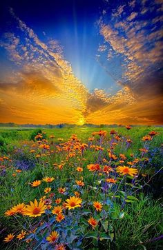 Field of flowers ◉ re-pinned by  http://www.waterfront-properties.com/pbgoldmarshclub.php