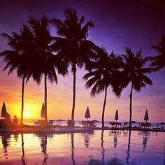 Palau Palms