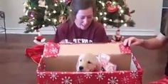 Watch This Definitive Proof That Puppies Are The World's Best Gifts