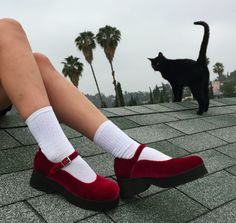 Shoes + cat