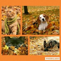 See 1 tip from visitors to NOLAs Finest Pet Care. Pet Home, Fall Weather, Corgi, Waiting, Pets, Animals, Corgis, Animales, Animaux