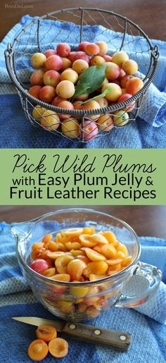 Wild plums are a forgotten American delicacy that can be used to make delicious wild plum jelly and wild plum fruit leather. It's a two-for-one recipe! Learn about wild plums, how to make plum jelly, and how to make fruit leather with no sugar on BrenDid.com.