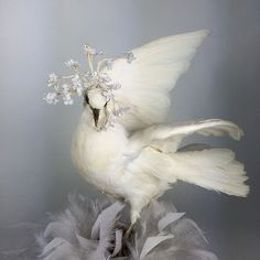 Snow white vintage taxidermy French rare dove Wedding Jeanne d'arc interior.