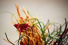 Natural Light, Food Photography, Nature, Plants, Naturaleza, Plant, Nature Illustration, Off Grid, Planets
