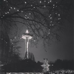 "7,783 Me gusta, 28 comentarios - Seattle (@seattle.city) en Instagram: ""The tallest Christmas tree ever displayed was in Seattle Washington in 1950. The Christmas tree…"" Tall Christmas Trees, Seattle Washington, Seattle City, Display, Building, Travel, Image, Instagram, Floor Space"