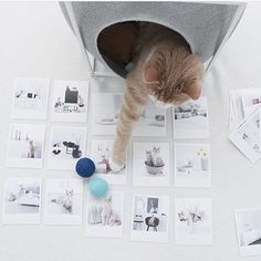 Classy furniture for discerning cats. Meyou, Paris Chic, Good Week, Cool Pictures, Scandinavian, Kitten, Photo Wall, Classy, House Design
