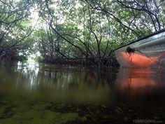 Cenários surreais nos túneis de mangues