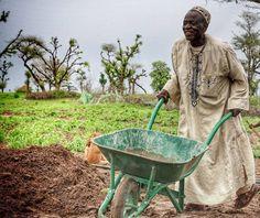 Sénégal, hard work