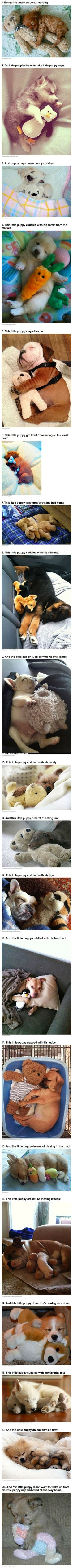 Puppies and Stuffed Animals Viral, Here is Why